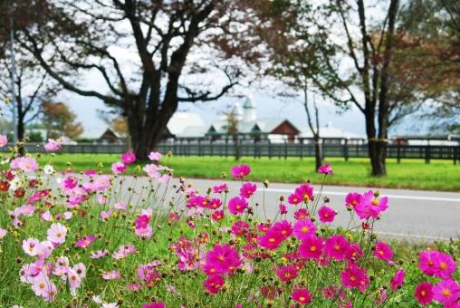 新ひだか町 風景写真